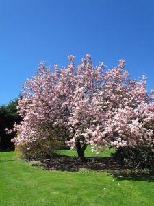 Magnolia #dordognelakeproperty
